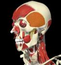 tmd diagnosis image 3
