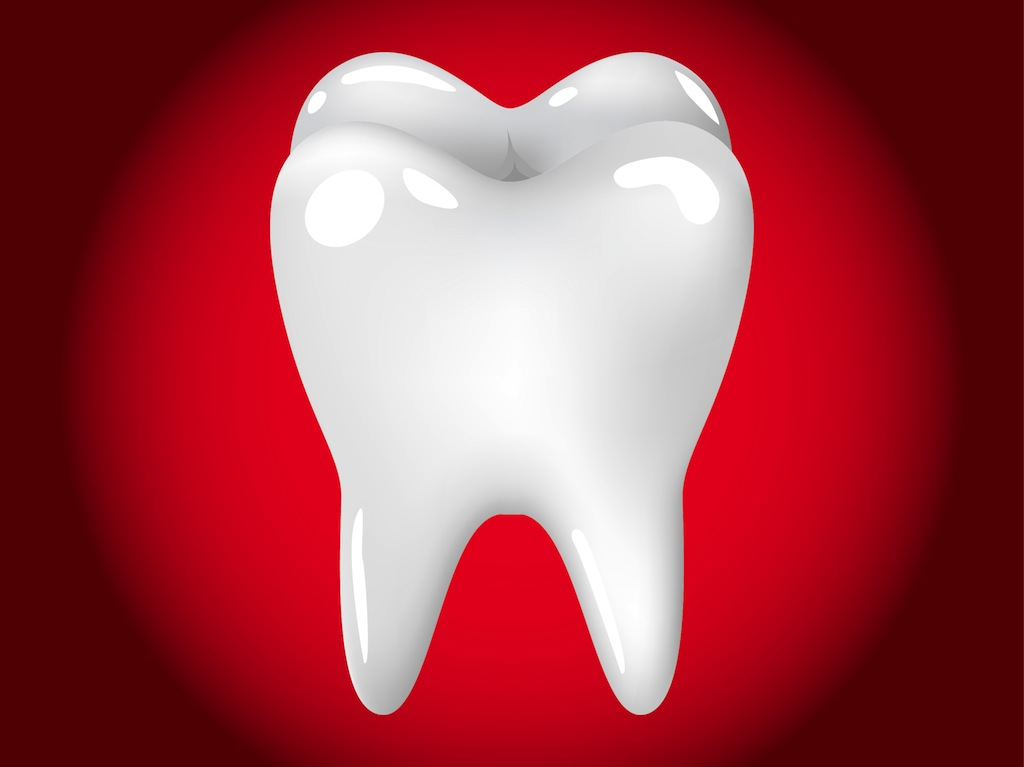 Study Suggests Beta-Catenin Molecule is Required for Tooth Root Formation