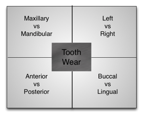 A square divided into quarters with Tooth Wear as a square in the middle. Four sections are: Maxillary vs Mandibular, Left vs Right, Anterior vs Posterior, Buccal vs Lingual
