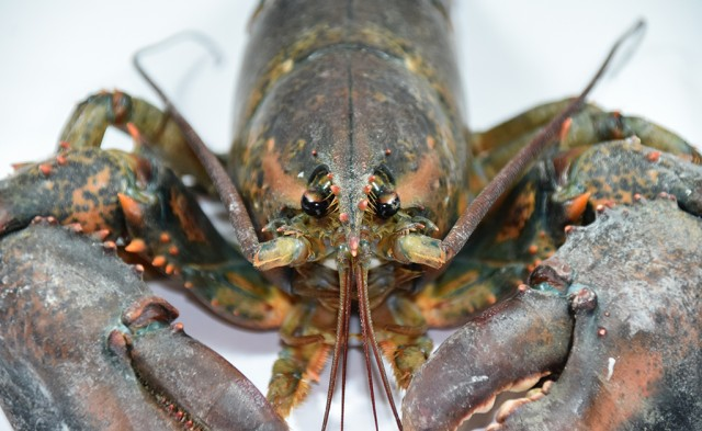 Why a Dental Practice Owner Should Be Like a Lobster