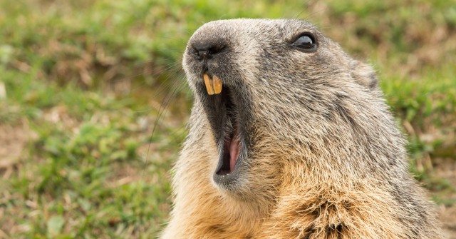 Are You Living a Groundhog Year … Again?