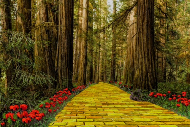 Practice Management Lessons We Can Learn From the Wizard of Oz - Part II